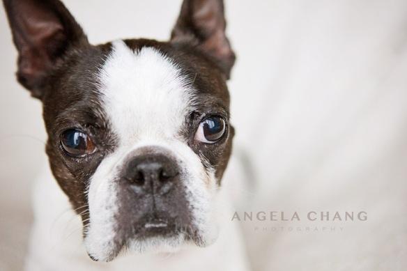 Angela Chang Photography-3338