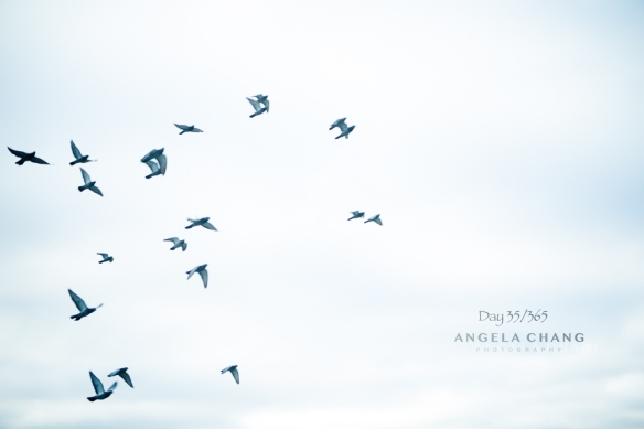 Angela Chang Photography Day 35 of 365