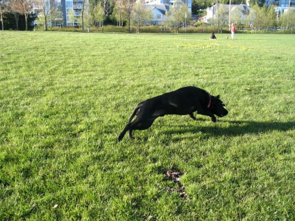When Sam was younger and full of energy, we spent lots of time playing fetch at the park.