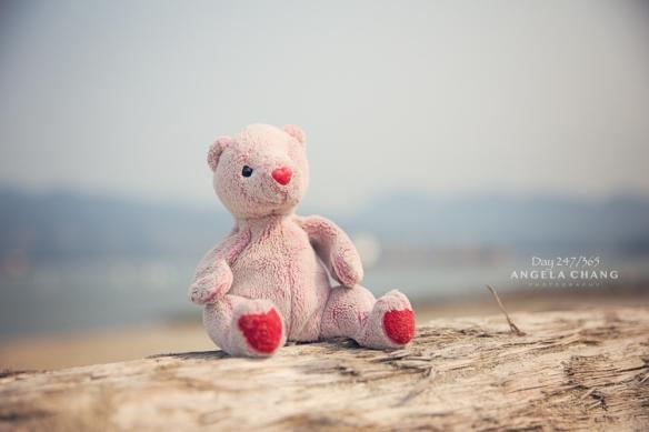Baby Bear at Jericho Beach