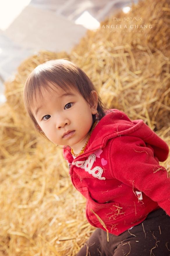 Savanna at a hay pile