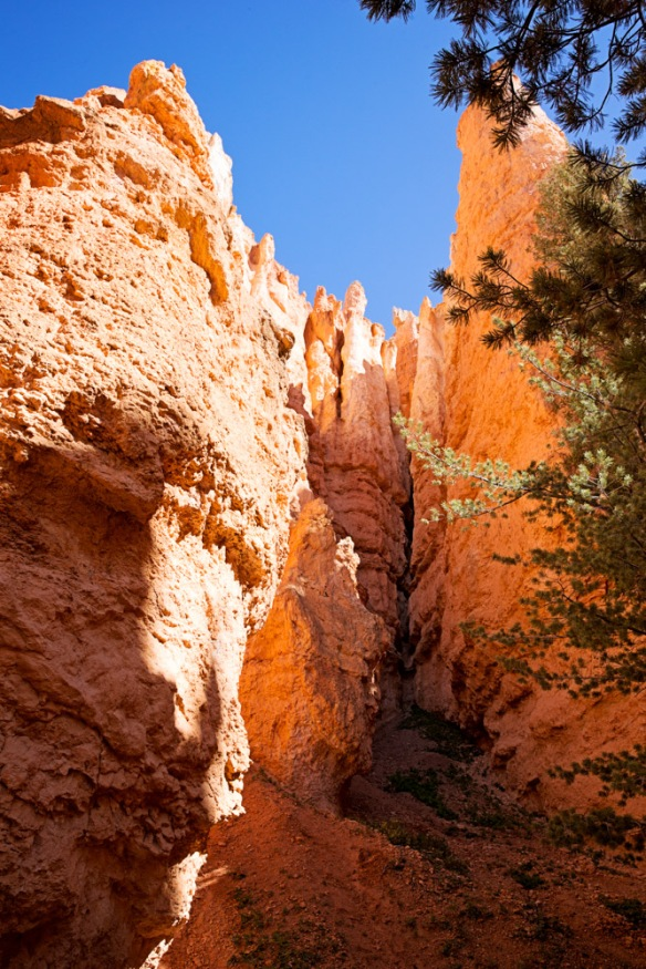 Day 3: Bryce National Park, Queens Garden trail and Navajo Loop--the Wall Street section