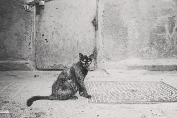 Angela Chang Photography Morocco travel cats-2