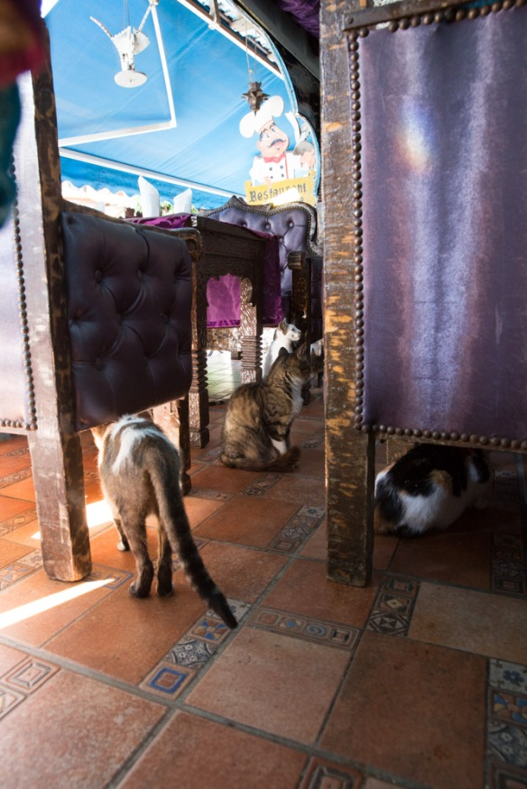 Angela Chang Photography Morocco travel cats-3