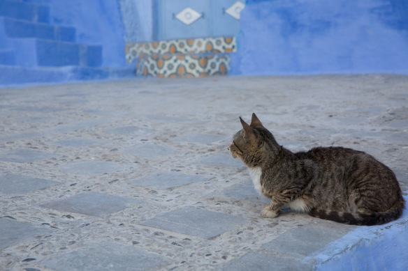 Angela Chang Photography Morocco travel cats-4