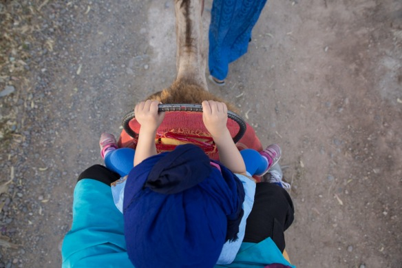 Camel ride morocco-1-4